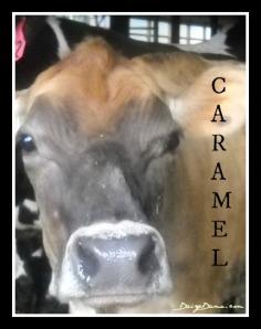 caramel cow
